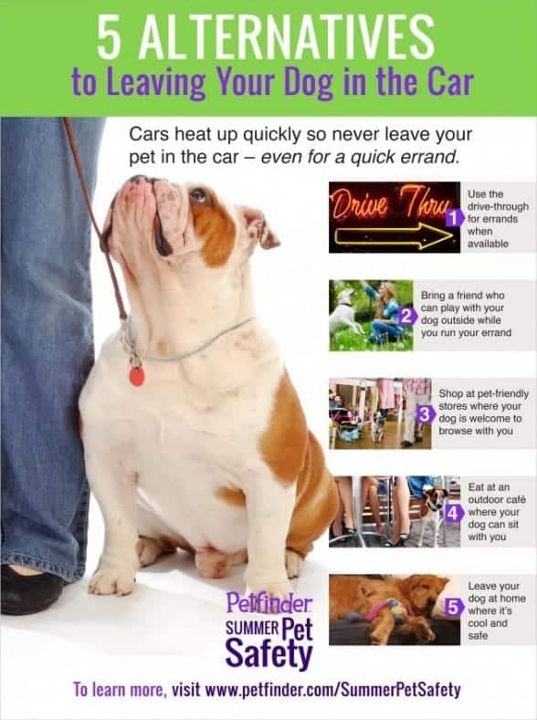 alternatives to leaving dog in car
